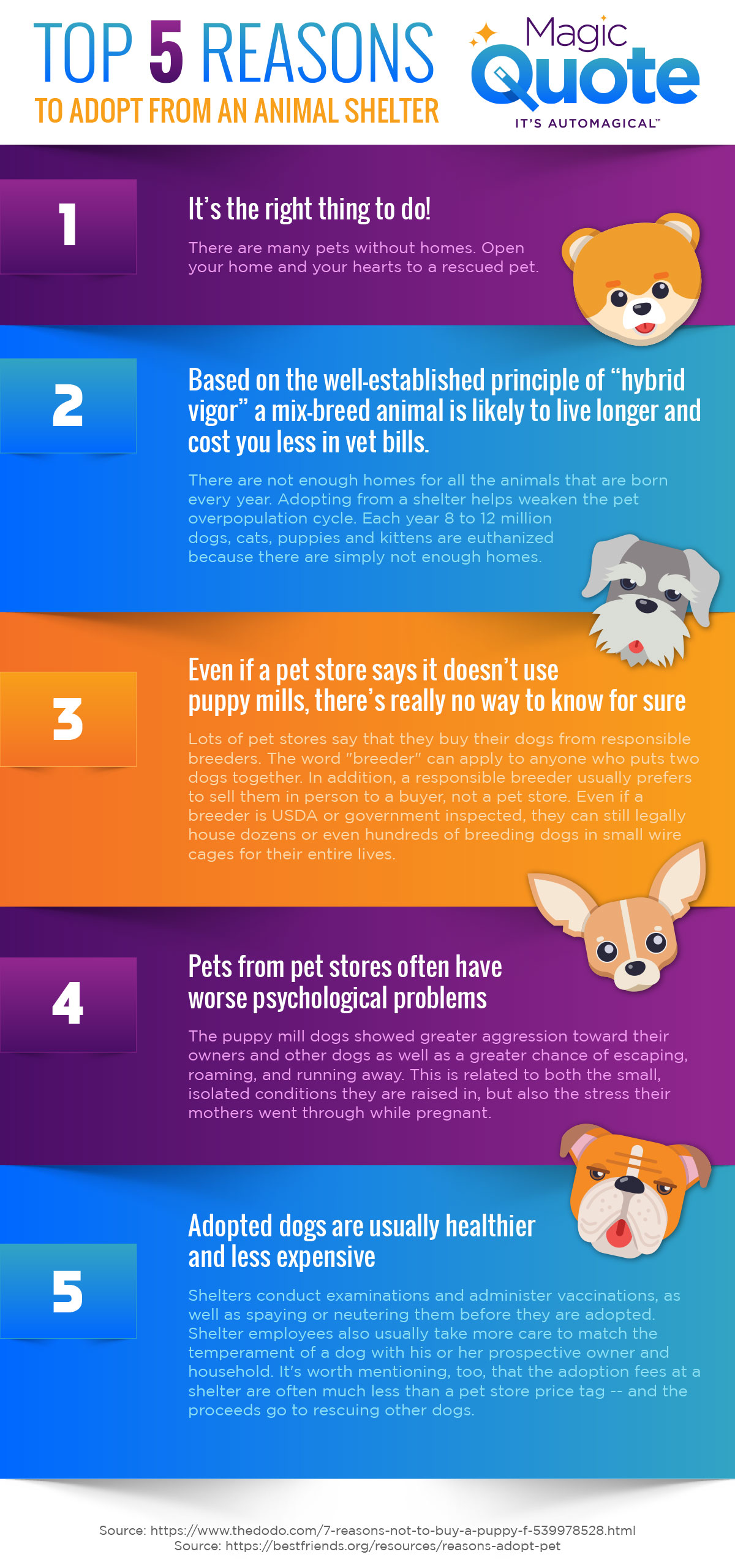 MQ-Infographic-Animal-Shelter-5-reasons